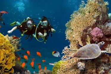 deux personnes en plongée sous-marine