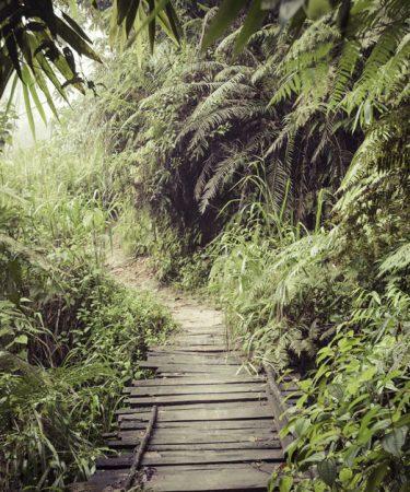 Randonnée dans la réserve tropicale de Sinharaja